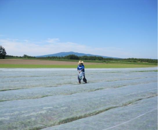 独立就農した男性が畑で作業をする姿
